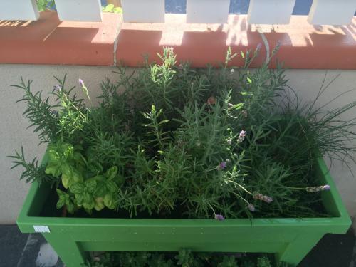 La-belle-gruissanaise-jardin-plantes